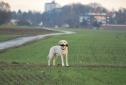 Superdog Benni
